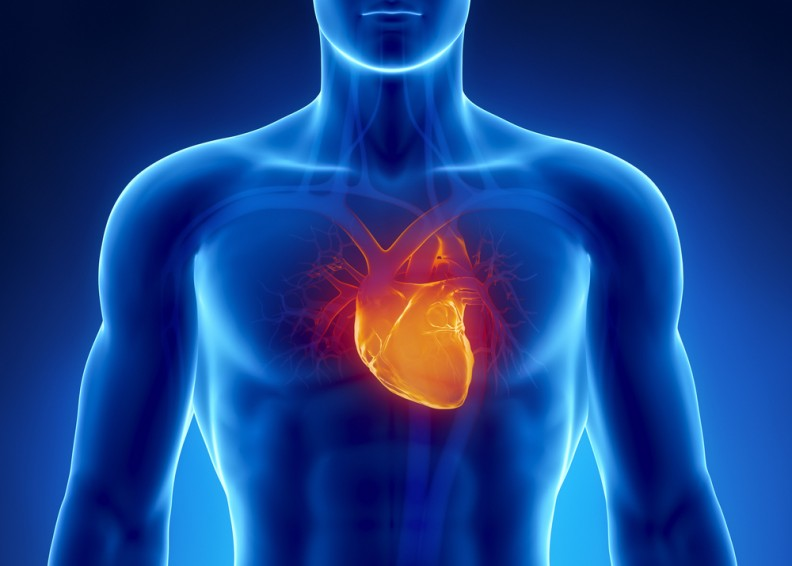 Electromagnetic Fields and the Heart: Basic Science and Clinical Use